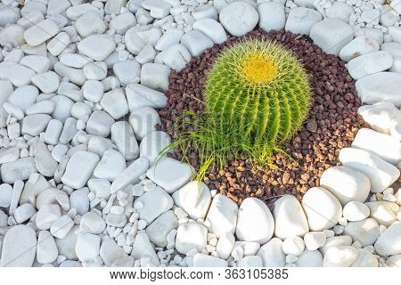 Cactus Grows On White Pebbles. Decorative White Pebbles For Decorating Flower Beds In The Park Or In