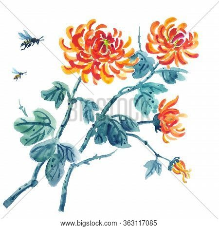 Chrysanthemums And Bees, Watercolor Illustration On A White Background In Chinese, Oriental Style. A