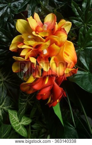 Orange calla lilies. Wedding decorations. Beautiful flowers