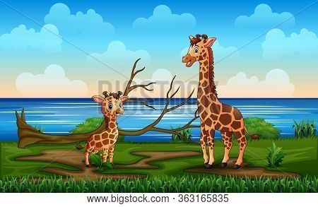 A Giraffe With Her Cub Enjoy In A Riverbank