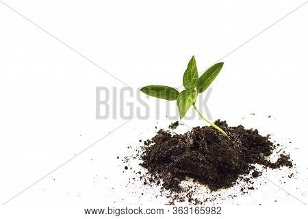 Close-up Of Small Plant Growing. The Concept Of Environmental Stewardship And World Environment Day