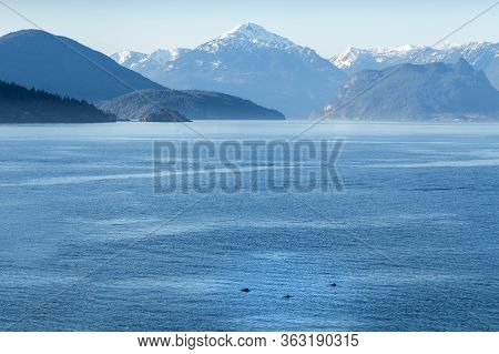 A Stunning Vista Of Howe Sound Mountains And Ocean With A Pod Of Dolphins Swimming The Foreground.