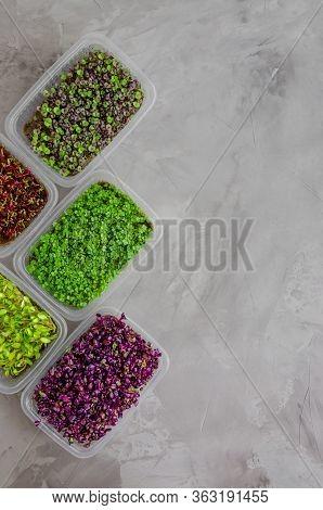 A Variety Of Micro Greens Of Radish, Beetroot, Basil, Arugula, Cucumber On A Dark Concrete Backgroun
