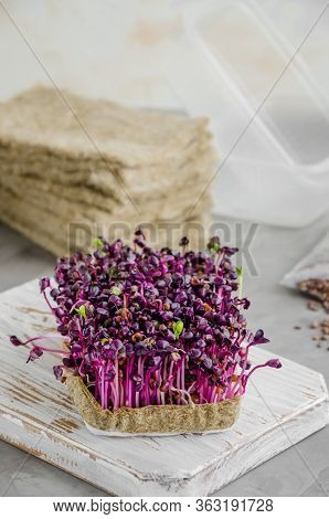 Micro Greens Of Radish On A Wooden Board With Radish Seeds, Plastic Containers And Linen Mats. Growi