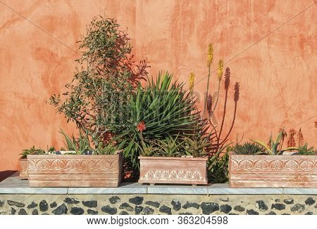 Plants Against A Colorful Wall At Oia Village In The Caldera By Day, Greece