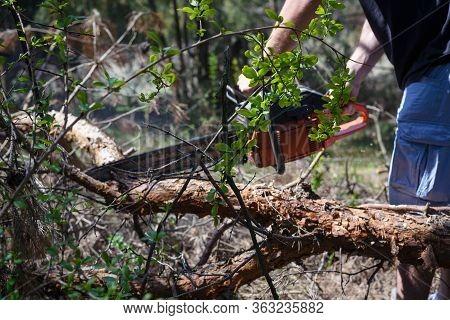 Lumberjack Cutting Wood In Nature. Lumberjack Man Cutting Logs With Electric Saw. Lumberjack Choppin