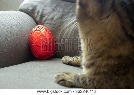 Red Easter Egg On The Corner Of A Couch Still Unwrapped With A Cat Beside It