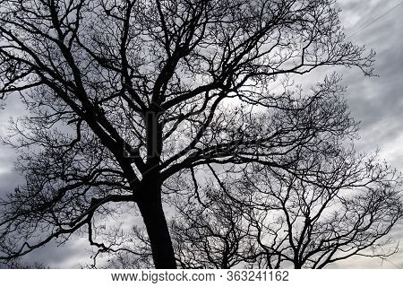 Ominous Silhouetted Tree On A Cold Overcast Morning
