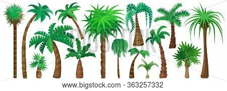 Palm Tree Isolated Cartoon Set Icon. Vector Illustration Tropical Forest On White Background. Vector