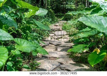 A Pathway In The Middle Of Green Plants And Trees In Lush Tropical Forest Near Yangshuo, China
