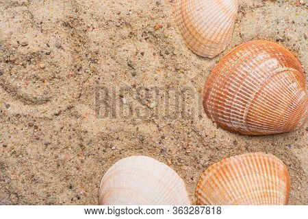 Seashells On A Golden Beach Sand. Summer Seaside Travel Concept. Copy Space On The Left.