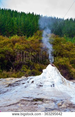Volcanic vapor. The beginning of a daily eruption. The world famous Lady Knox geyser.The Waimangu Volcanic Rift Valley, North Island, New Zealand. The largest geyser-like feature in the world