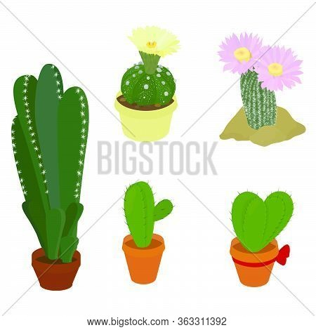 Cactus Plants Set. Houseplants In Pots. Floral Vector Illustration Isolated On White Background. Cac