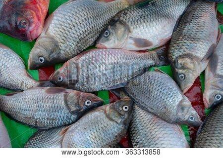 Bhetki Or Barramundi (lates Calcarifer) Or Asian Sea Bass, Is A Popular Fish Among Bengali People, S