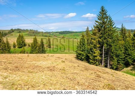 Forest On The Grassy Meadow In Mountains. Beautiful Sunny Landscape Of Mountainous Countryside. Fluf