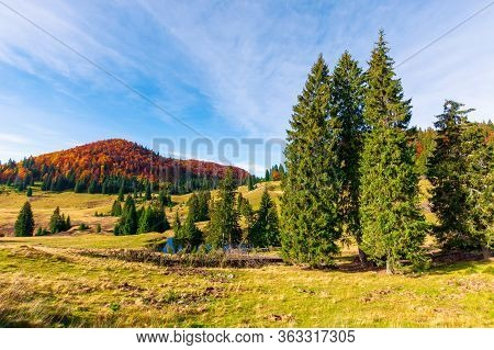 Autumn Landscape In Mountains. Fir Trees Around The Pond On The Meadow In Yellowish Weathered Grass.