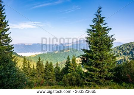 Forest On The Grassy Meadow In Mountains. Beautiful Sunny Landscape With Distant Valley Full Of Fog.