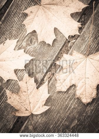 Autumn Leaves On Wooden Plank As Nature Background. Copy Space. Bw Filter Toned.