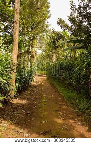 Path Or Street In An African Village