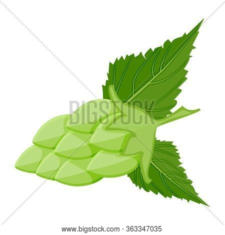 Hop Cone Isolated On White Background. Stylized Hops With Leafs Icons Or Logos For Beer, Stout, Ale,