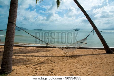 Hammock Strung Between Two Palms On Tropical Island.