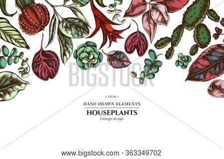 Floral Design With Colored Ficus, Iresine, Kalanchoe, Calathea, Guzmania Cactus Stock Illustration