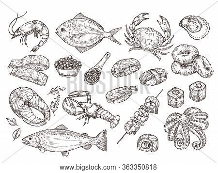 Hand Drawn Seafood. Natural Oyster Squid, Caviar. Japanese Meal Ingredients. Isolated Sketch Sushi S