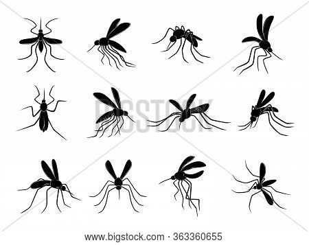 Mosquito. Flying Insects Carriers Of Viruses Bloodsuckers Vector Drawn Mosquitos. Insect Mosquito, B