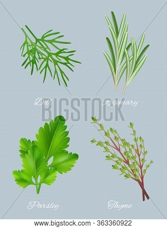 Green Herbs. Realistic Species For Culinary Medical Plants Food Aromatic Ingredients Healthy Leaves
