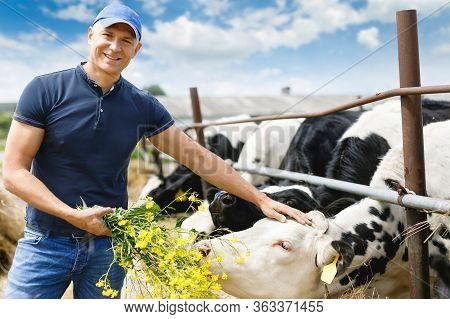 Portrait Of A Positive Farmer With A Cow On A Ranch