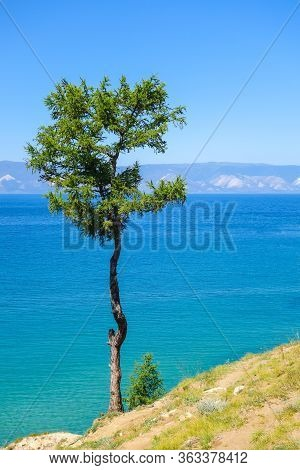 Lonely Tree On A Background Of Blue Sky. Relict Larch On The Island Of Olkhon. Lake Baikal, Russia.