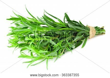Bunch Of Tarragon Leaves Isolated On White Background. Artemisia Dracunculus