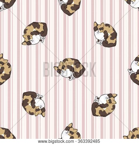 Cute Cartoon Tortoiseshell Cat Seamless Vector Pattern. Pedigree Kitty Breed Domestic Kitty Backgrou