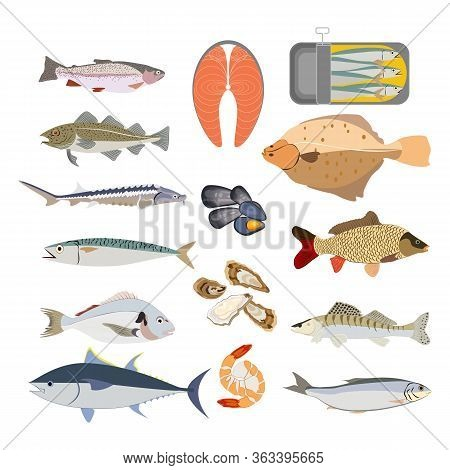 Fish Types Nature Healthy Food Vector Illustration