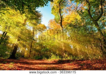 Colorful Autumn Forest Landscape With Warm Sun Rays Illumining The Foliage And A Path Leading Throug