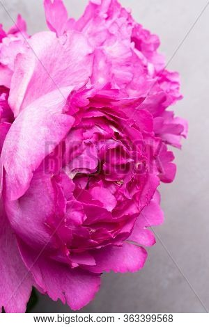 Pion-shaped Roses, A Bouquet Of Pion-shaped Roses On Grey Background