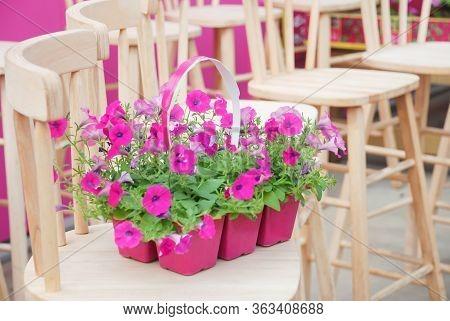 Petunia ,petunias In The Tray,petunia In The Pot, Pink Petunia On The Wood Chair