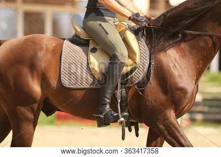 Saddle With Stirrups On A Back Of A Horse. Close Up Of A Sport Horse. Dressage Of Horses. Equestrian