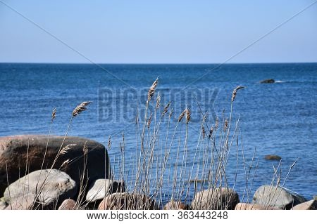 Coastline With Blue Water And Sunlit Reeds
