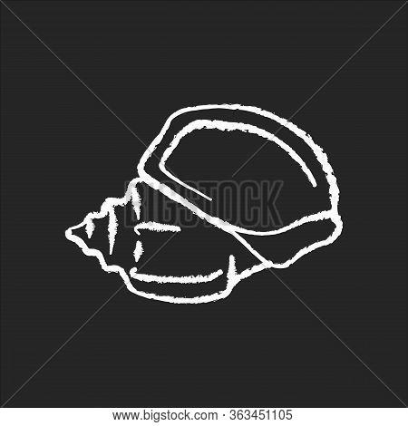 Triton Trumpet Shell Chalk White Icon On Black Background. Large Exotic Seashell, Conchology Charoni