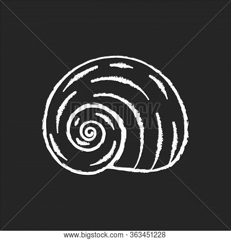 Spiral Shell Chalk White Icon On Black Background. Gastropod Seashell, Conchology Empty Molluscan An