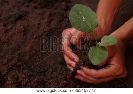 A Woman Planting A Growing Plant On The Ground