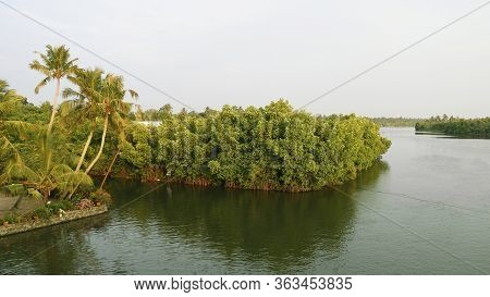 Mangroves (kandal Kadu) Are Trees Or Shrubs That Grow In Salty Water In Hot Places Like The Tropics.