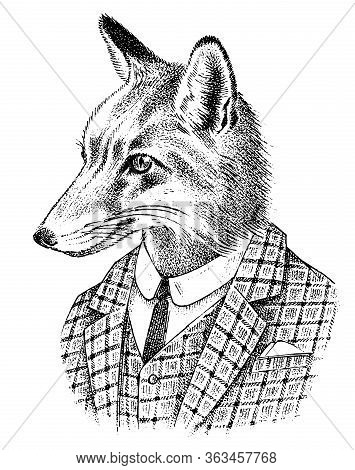 Fox Dressed Up In Suit. Aristocrat Or Old Gentleman. Fashion Animal Character In Office Style. Hand