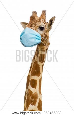Giraffe With Health Face Mask, Care Concept