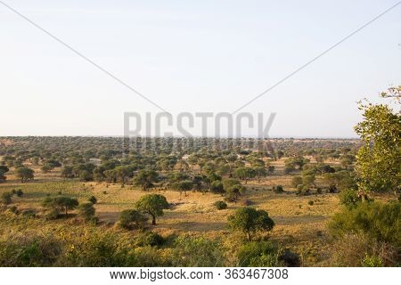 Early Morning Mood In The African Steppe