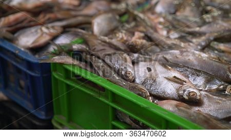 Ready Frozen Fish In A Box. A Party Of Frozen Fish In A Box. Fresh Fish On Ice In A Cardboard Box. F