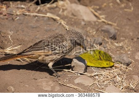 Camouflaged Bird Sitting On The Earthy Ground