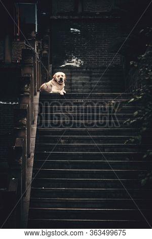 Dog in Xiahao Old street in Chongqing, China.