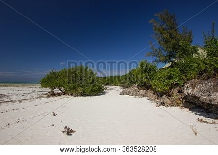 Shrubbery On A Withe Sand Beach In Africa On A Very Sunny Day